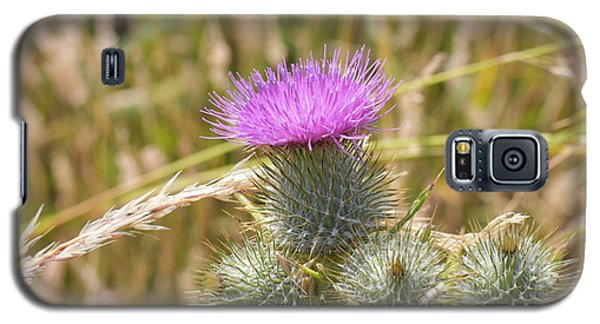 Scottish Thistle Galaxy S5 Case