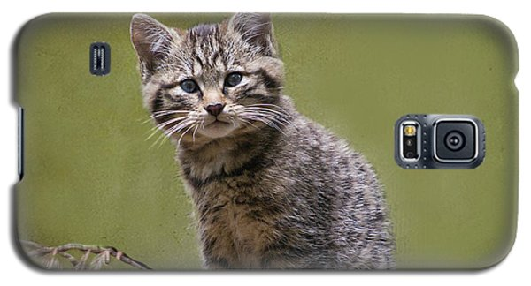 Scottish Wildcat Kitten Galaxy S5 Case