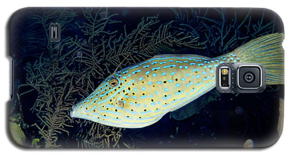 Galaxy S5 Case featuring the photograph Scrawled Filefish by Jean Noren