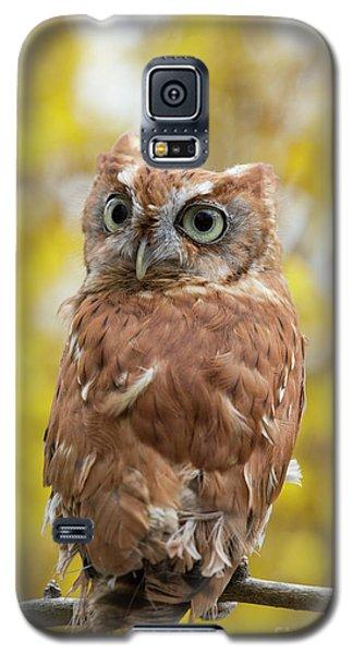 Screech Owl 1 Galaxy S5 Case
