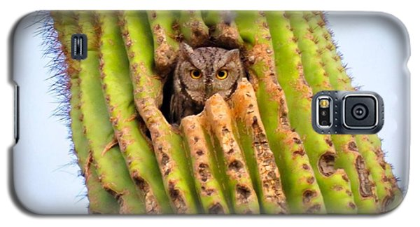 Screech Owl In Saguaro Galaxy S5 Case
