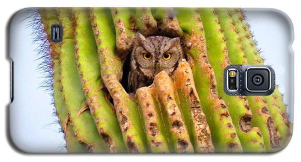 Screech Owl In Saguaro Galaxy S5 Case