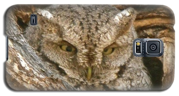 Screech Owl On Spring Creek Galaxy S5 Case