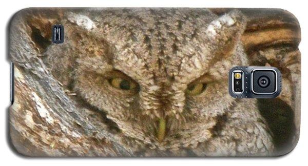 Screech Owl On Spring Creek Galaxy S5 Case