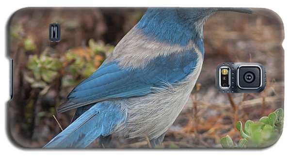 Scrub Jay Framed In Green Galaxy S5 Case