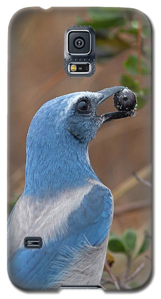 Scrub Jay With Acorn Galaxy S5 Case