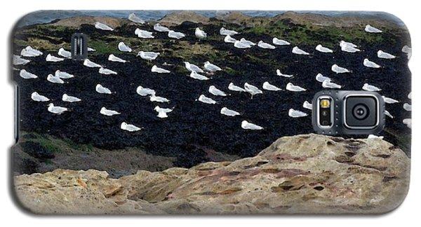 Sea Birds At Rest Galaxy S5 Case