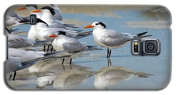 Galaxy S5 Case featuring the photograph Sea Birds by Gouzel -