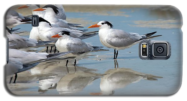 Sea Birds Galaxy S5 Case by Gouzel -