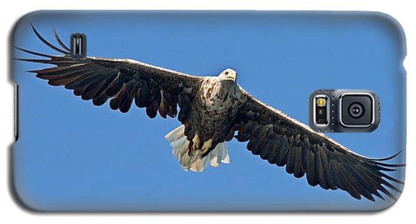 Sea Eagle Galaxy S5 Case