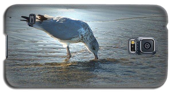 Sea Gull At Sundown Galaxy S5 Case