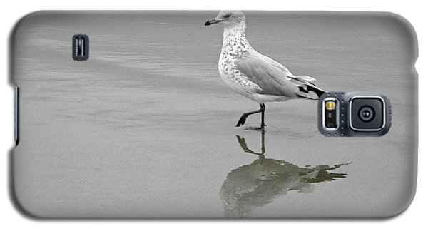 Sea Gull Walking In Surf Galaxy S5 Case