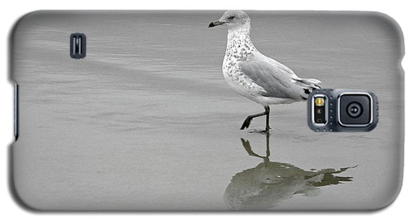 Sea Gull Walking In Surf Galaxy S5 Case