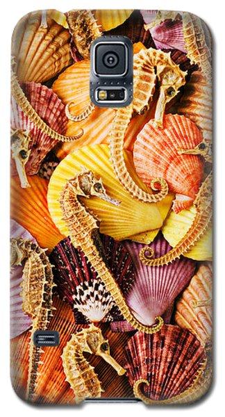 Sea Horses And Sea Shells Galaxy S5 Case