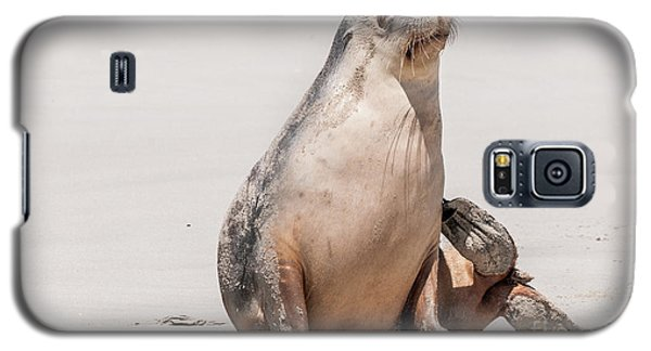 Sea Lion 1 Galaxy S5 Case by Werner Padarin