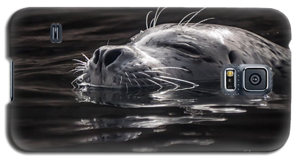 Sea Lion Basking In The Light Galaxy S5 Case