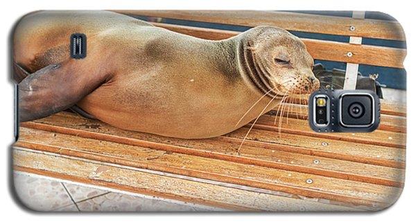 Sea Lion On A Bench, Galapagos Islands Galaxy S5 Case by Marek Poplawski