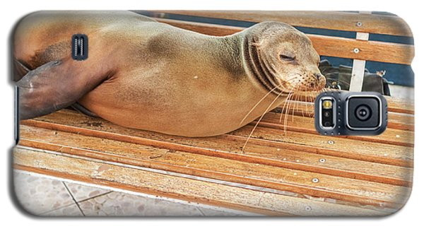 Sea Lion On A Bench, Galapagos Islands Galaxy S5 Case