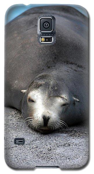 Sea Lion Snooze Galaxy S5 Case