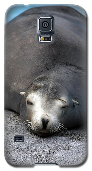 Sea Lion Snooze Galaxy S5 Case