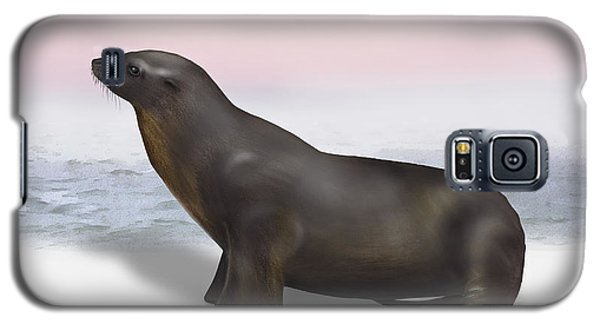 Sea Lion Zalophus Californianus - Marine Mammal - Seeloewe Galaxy S5 Case
