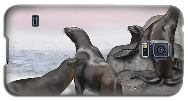 Sea Lion Zalophus Californianus - Marine Mammals - Seeloewen Galaxy S5 Case