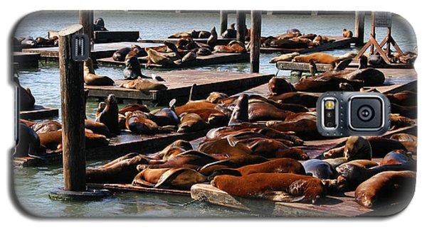 Sea Lions At Pier 39 In San Francisco Galaxy S5 Case