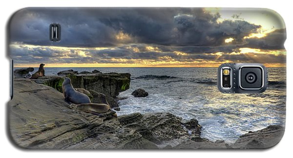 Galaxy S5 Case featuring the photograph Sea Lions At Sunset by Eddie Yerkish