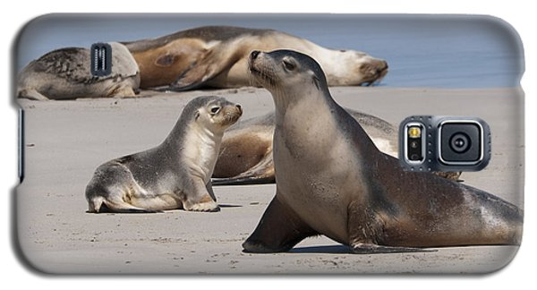 Galaxy S5 Case featuring the photograph Sea Lions by Werner Padarin