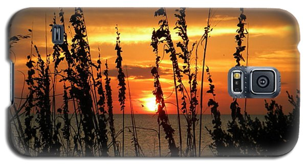 Sea Oats In The Sun Galaxy S5 Case