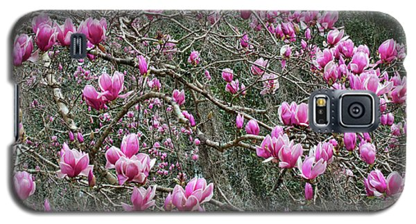 Saucer Magnolia Galaxy S5 Case - Sea Of Pink Magnolias With Branches by Carol Groenen