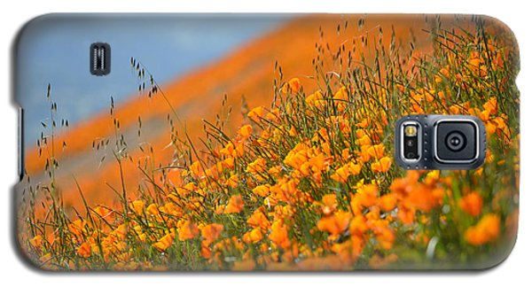 Sea Of Poppies Galaxy S5 Case by Kyle Hanson