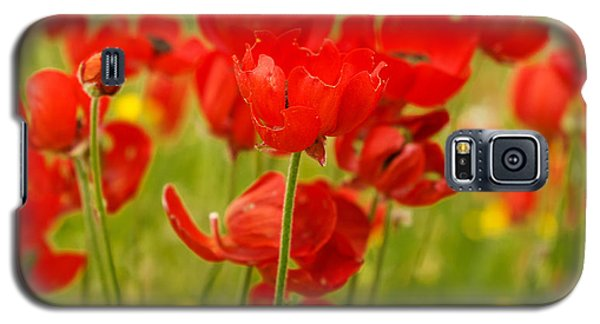 Sea Of Red Buttercups Galaxy S5 Case by Uri Baruch