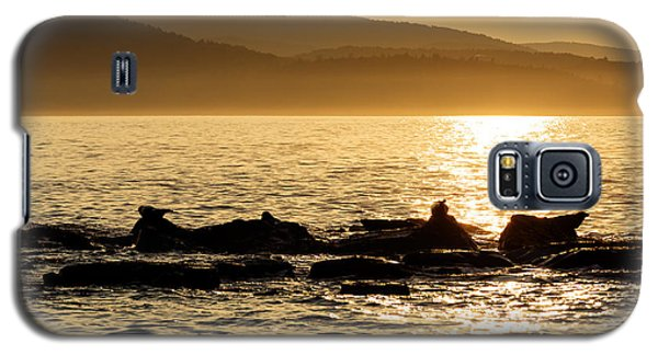 Galaxy S5 Case featuring the photograph Sea Of Seals by Gary Smith