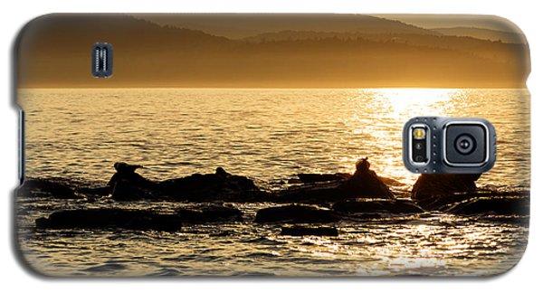 Sea Of Seals Galaxy S5 Case by Gary Smith