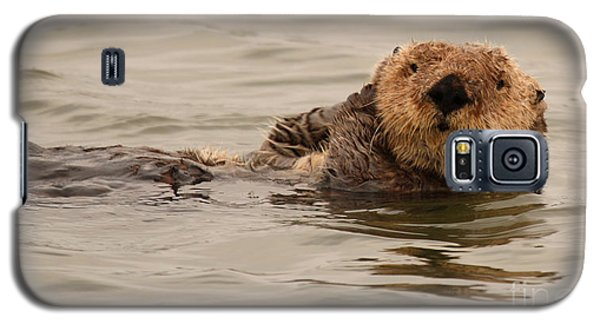 Galaxy S5 Case featuring the photograph Sea Otter All Cuddled Up by Max Allen
