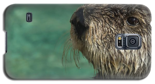 Sea Otter Stare Down Galaxy S5 Case