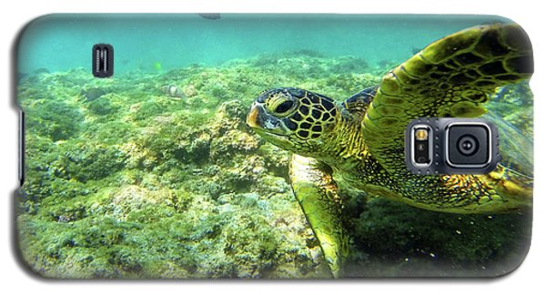 Galaxy S5 Case featuring the photograph Sea Turtle #2 by Anthony Jones