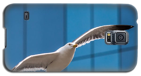 Seabird Flying On The Glass Building Background Galaxy S5 Case