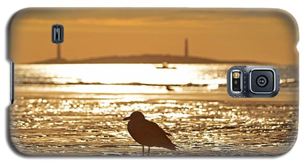 Seagull Admiring Thacher Island Gloucester Ma Good Harbor Beach Galaxy S5 Case