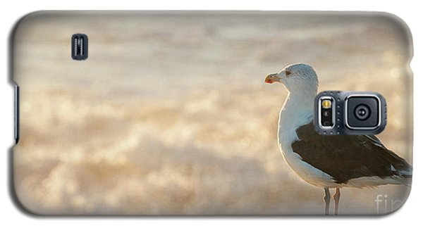 Seagull At Sunrise Galaxy S5 Case