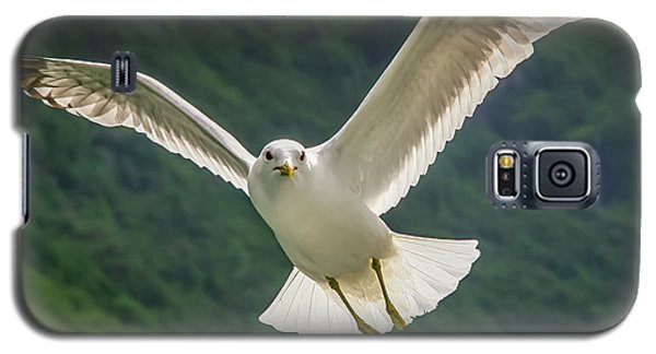 Seagull At The Fjord Galaxy S5 Case