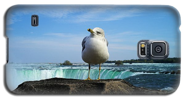 Seagull Checking Out The Photographers Galaxy S5 Case