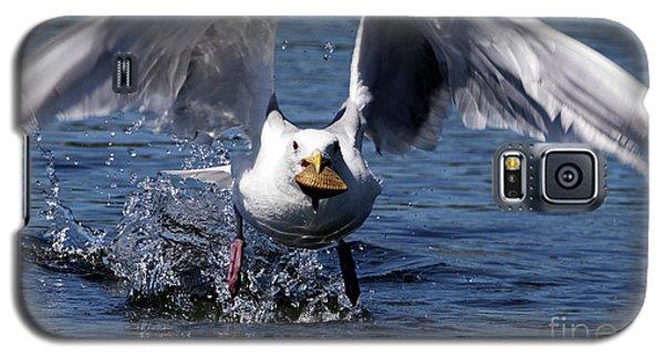Seagull Flight Galaxy S5 Case