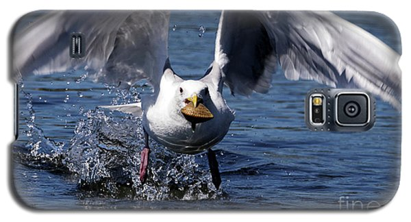 Seagull Flight Galaxy S5 Case