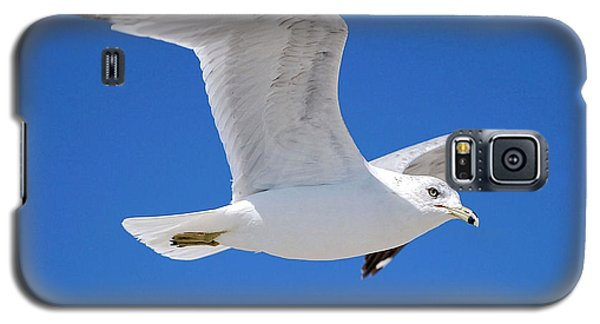Seagull Galaxy S5 Case by Ludwig Keck