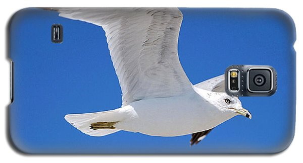 Seagull Galaxy S5 Case