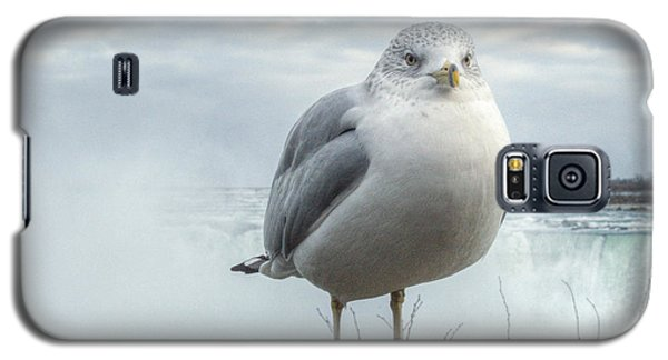 Seagull Model Galaxy S5 Case