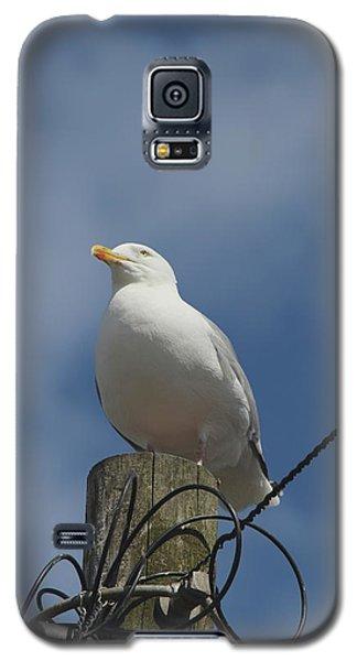 Seagull Perching. Galaxy S5 Case
