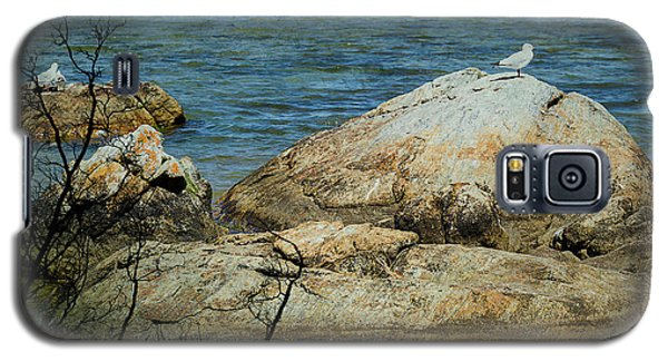 Seagull On A Rock Galaxy S5 Case